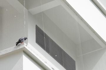 鳥よけネット・群馬県のアパートマンションリフォーム